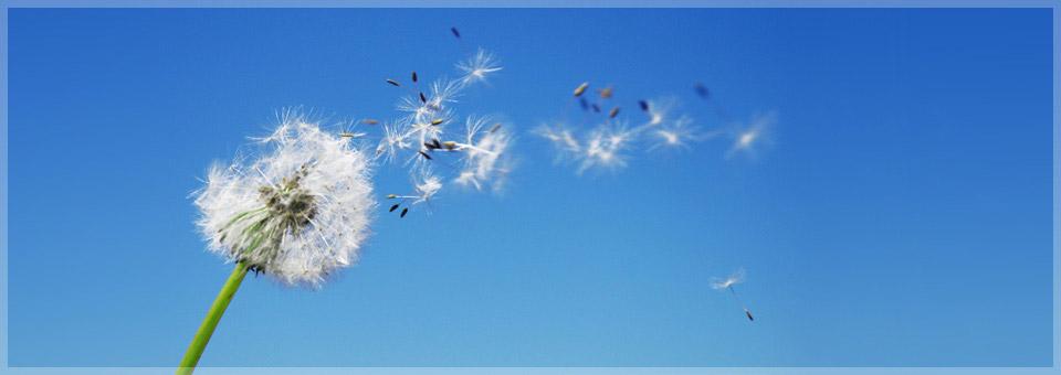 Luft - Atme Dich gesund